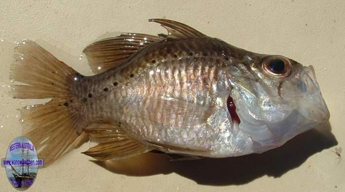 FISHING IN WESTERN AUSTRALIA   Western Australia   www