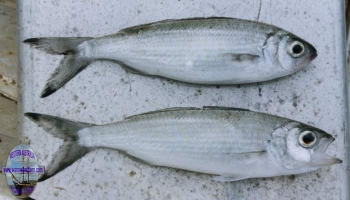 FISHING IN WESTERN AUSTRALIA | Western Australia | www