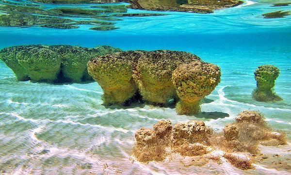 Stromatolites Worlds Oldest Life Forms Western