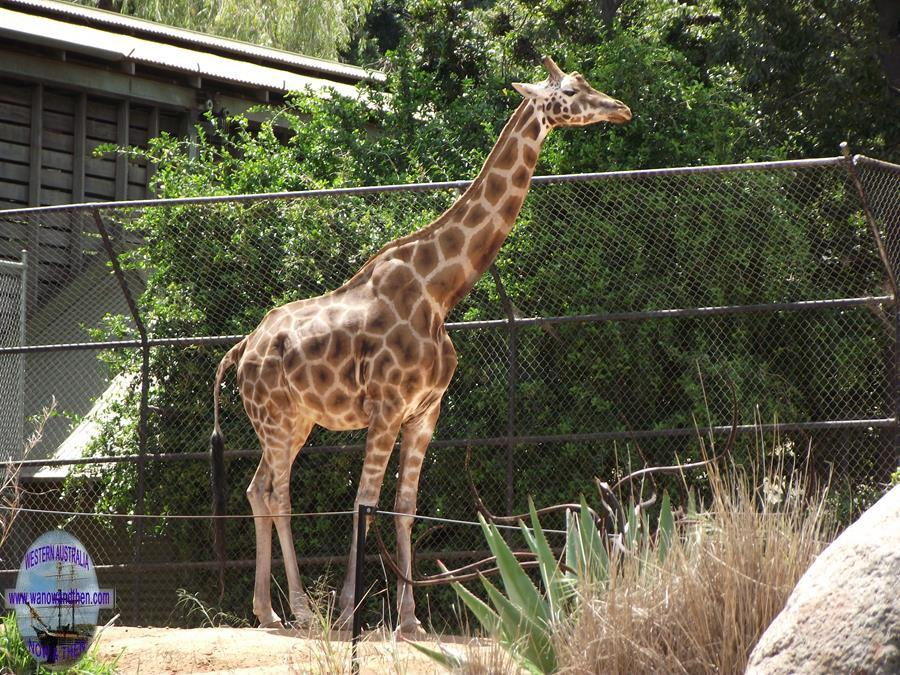 Perth Zoo photo gallery