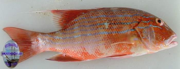 Fishing In Western Australia Western Australia Www Wanowandthen Com